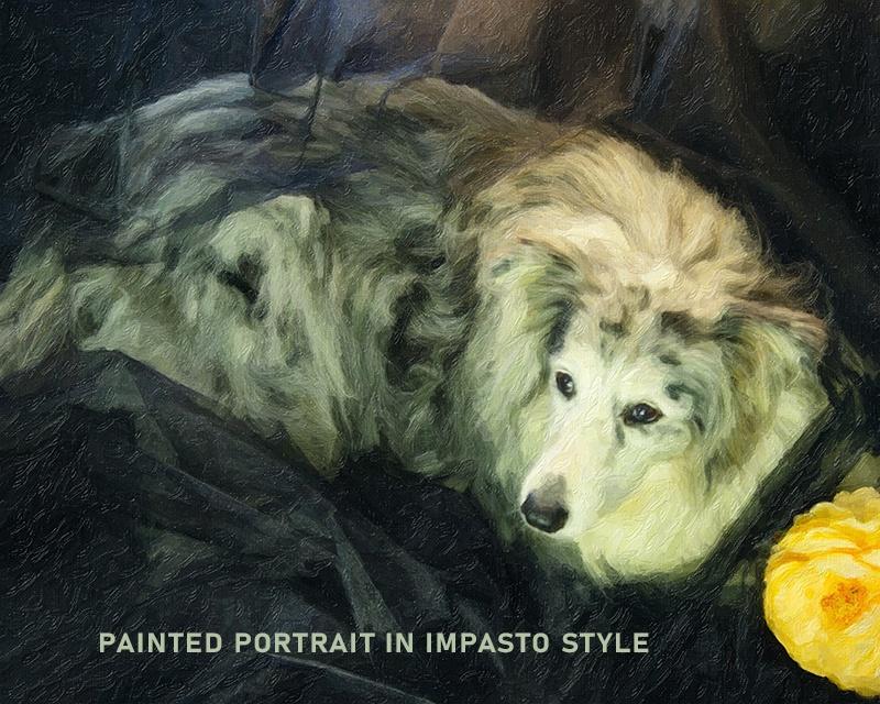 Joy Studio - Pet portraits